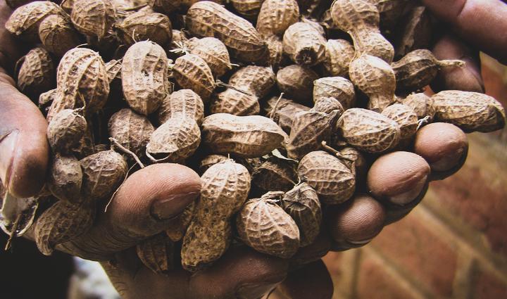 Malawi2013 Peanuts